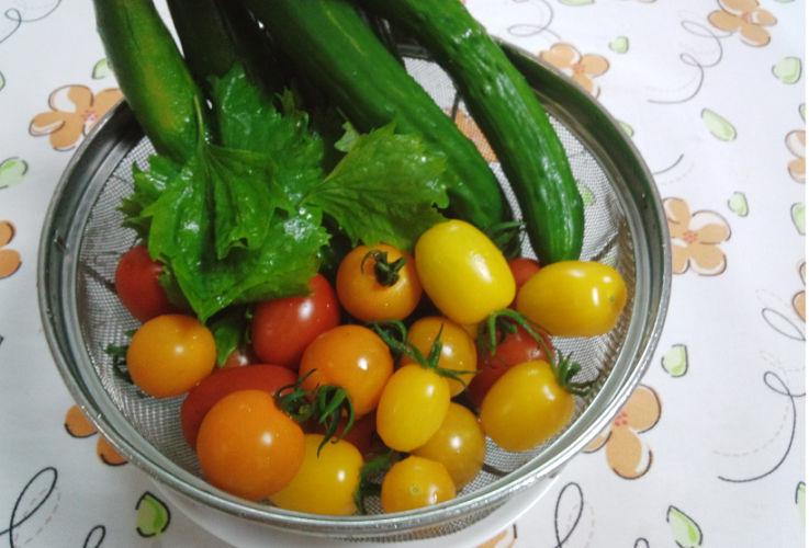 家庭菜園、毎日収穫してます_a0151444_14115274.jpg