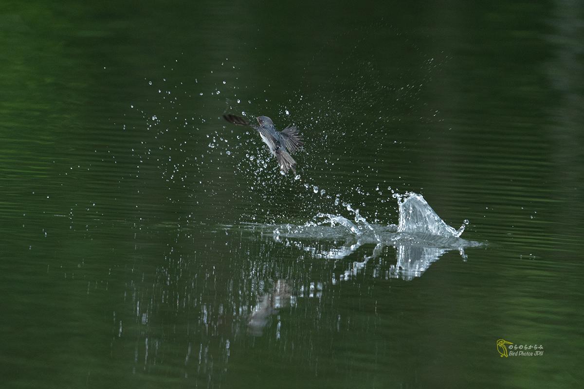 ツバメと水しぶき_d0360547_12033368.jpg