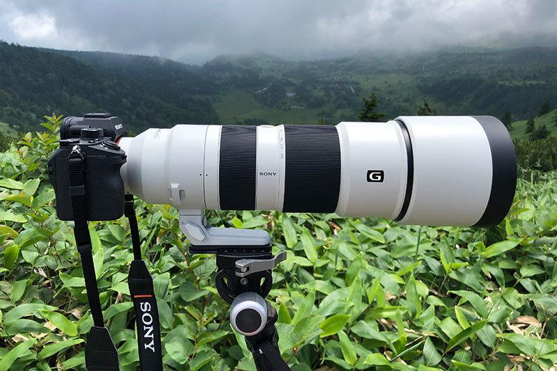 ソニー アルファで野鳥撮影:Sony α9 と『FE 200-600mm F5.6-6.3 G OSS』, 『FE 600mm F4 GM OSS』_d0360547_17221881.jpg