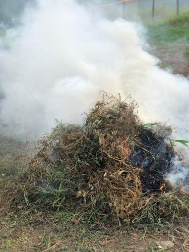 燃やしながら草刈り・・毎日続きます_c0222448_14241128.jpg