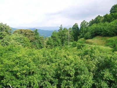香り高き柚子(ゆず) 令和元年の青柚子は9月中旬より出荷予定!今のうち青唐辛子を購入しておいて下さい_a0254656_15040973.jpg