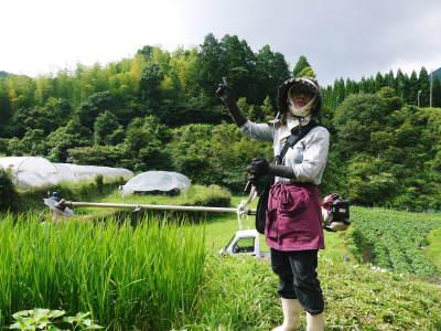 香り高き柚子(ゆず) 令和元年の青柚子は9月中旬より出荷予定!今のうち青唐辛子を購入しておいて下さい_a0254656_15371812.jpg