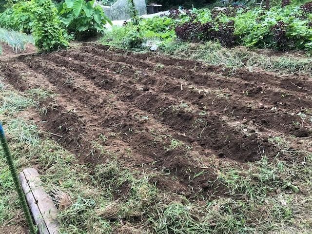大根種まきと秋ジャガのための土づくり8・1~2_c0014967_17015700.jpg