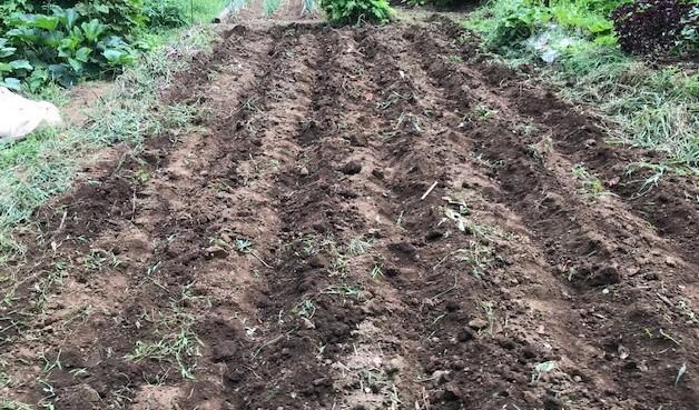 大根種まきと秋ジャガのための土づくり8・1~2_c0014967_17021274.jpg