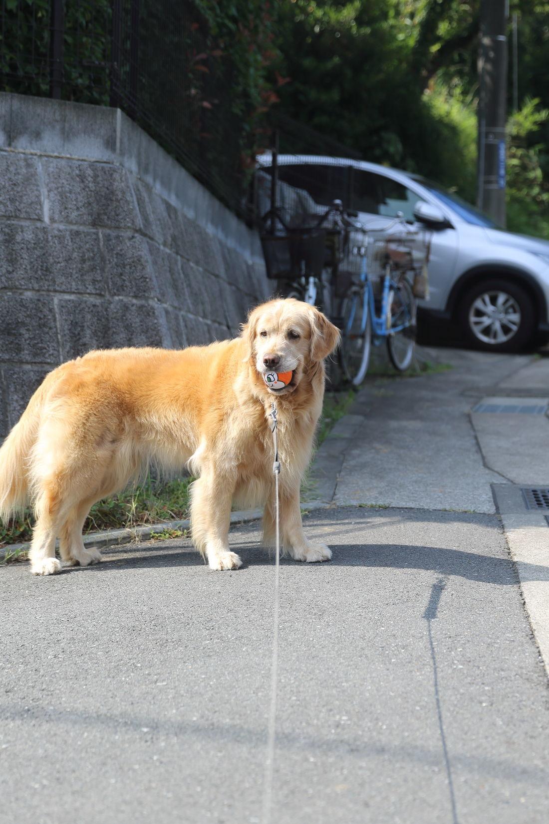 夏のお散歩♪_b0275998_10380935.jpg