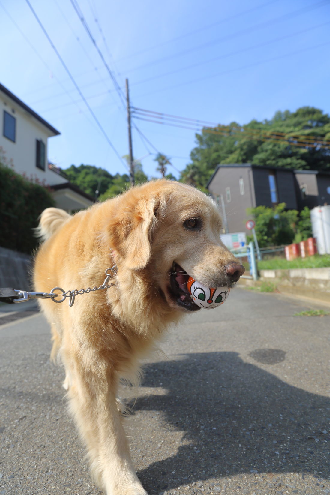 夏のお散歩♪_b0275998_10381200.jpg