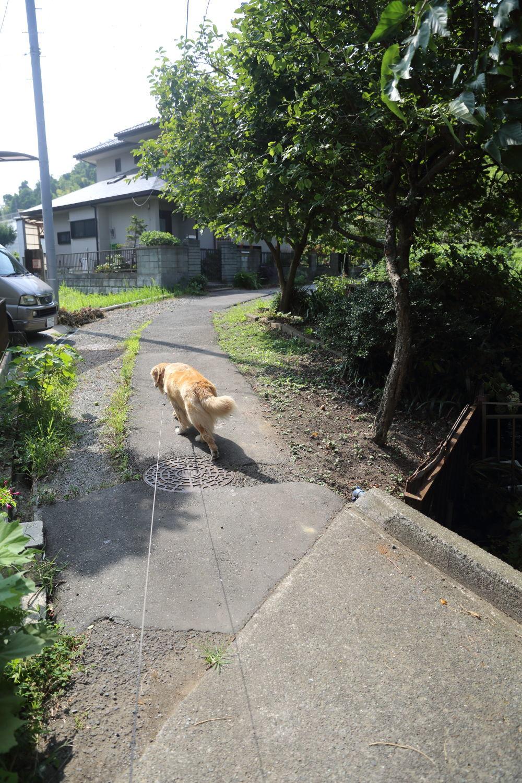 夏のお散歩♪_b0275998_10382611.jpg
