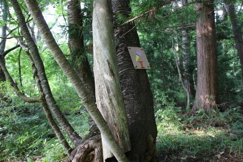 黒田充紀・三佳ご夫妻オーナーのDARAKE農園に隣接する『秘密の森』を散策する_c0075701_21204775.jpg