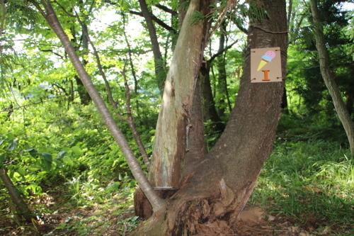 黒田充紀・三佳ご夫妻オーナーのDARAKE農園に隣接する『秘密の森』を散策する_c0075701_21210070.jpg
