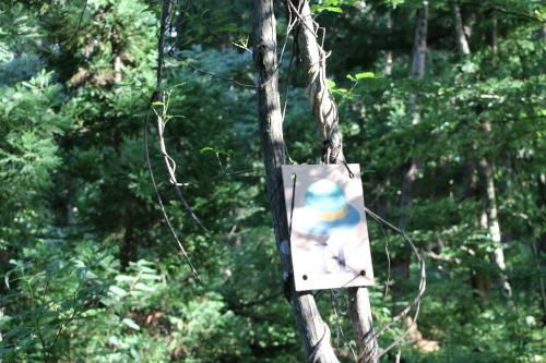 黒田充紀・三佳ご夫妻オーナーのDARAKE農園に隣接する『秘密の森』を散策する_c0075701_21210766.jpg