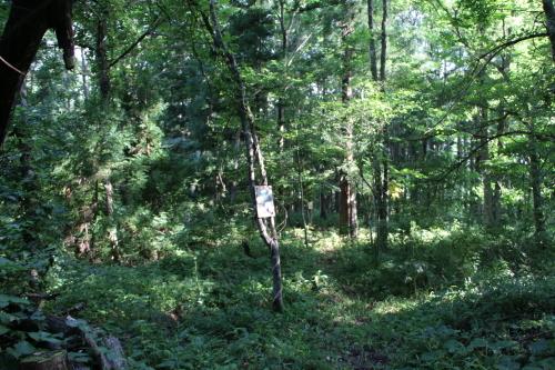 黒田充紀・三佳ご夫妻オーナーのDARAKE農園に隣接する『秘密の森』を散策する_c0075701_21211300.jpg