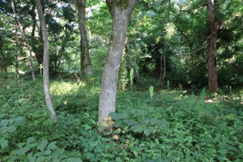 黒田充紀・三佳ご夫妻オーナーのDARAKE農園に隣接する『秘密の森』を散策する_c0075701_21382641.jpg