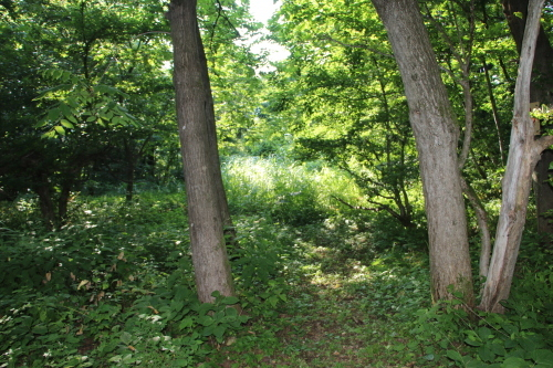 黒田充紀・三佳ご夫妻オーナーのDARAKE農園に隣接する『秘密の森』を散策する_c0075701_21384697.jpg