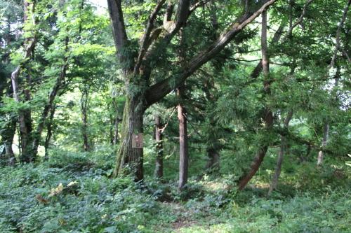 黒田充紀・三佳ご夫妻オーナーのDARAKE農園に隣接する『秘密の森』を散策する_c0075701_21392746.jpg