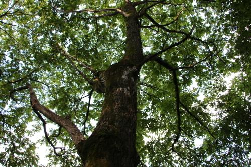 黒田充紀・三佳ご夫妻オーナーのDARAKE農園に隣接する『秘密の森』を散策する_c0075701_21400061.jpg