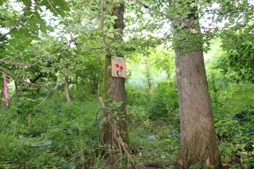 黒田充紀・三佳ご夫妻オーナーのDARAKE農園に隣接する『秘密の森』を散策する_c0075701_21400512.jpg
