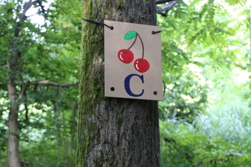 黒田充紀・三佳ご夫妻オーナーのDARAKE農園に隣接する『秘密の森』を散策する_c0075701_21401386.jpg