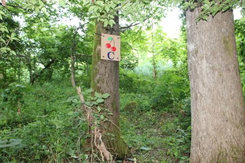 黒田充紀・三佳ご夫妻オーナーのDARAKE農園に隣接する『秘密の森』を散策する_c0075701_21402076.jpg