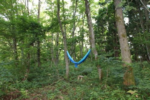 黒田充紀・三佳ご夫妻オーナーのDARAKE農園に隣接する『秘密の森』を散策する_c0075701_21402765.jpg