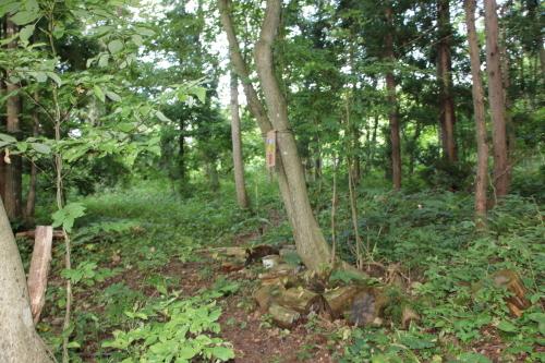黒田充紀・三佳ご夫妻オーナーのDARAKE農園に隣接する『秘密の森』を散策する_c0075701_21403876.jpg