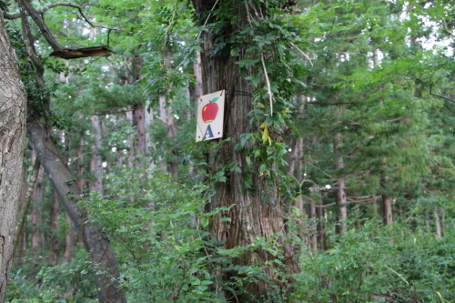 黒田充紀・三佳ご夫妻オーナーのDARAKE農園に隣接する『秘密の森』を散策する_c0075701_21405082.jpg