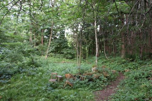 黒田充紀・三佳ご夫妻オーナーのDARAKE農園に隣接する『秘密の森』を散策する_c0075701_21411369.jpg