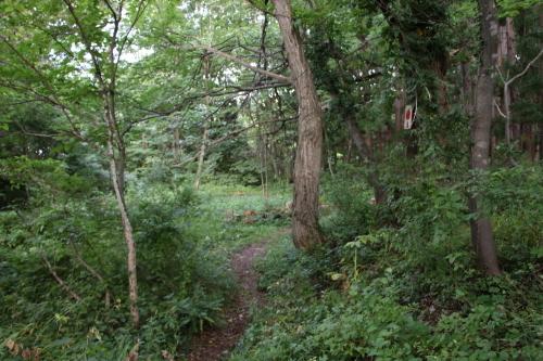 黒田充紀・三佳ご夫妻オーナーのDARAKE農園に隣接する『秘密の森』を散策する_c0075701_21412670.jpg
