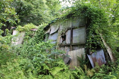 黒田充紀・三佳ご夫妻オーナーのDARAKE農園に隣接する『秘密の森』を散策する_c0075701_21414494.jpg
