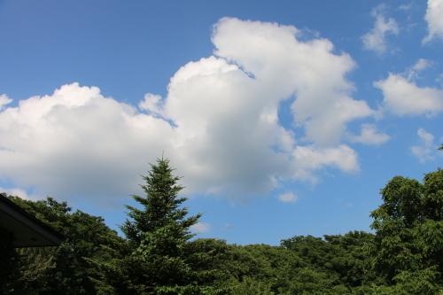 黒田充紀・三佳ご夫妻オーナーのDARAKE農園に隣接する『秘密の森』を散策する_c0075701_21422377.jpg
