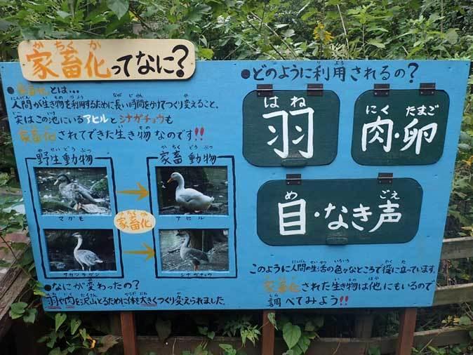 シラコバトと水鳥の池(智光山公園こども動物園 October 2018)_b0355317_20364245.jpg