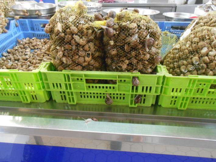 バレンシアで料理する 5)みんなでバレンシア中央市場へ!前編・圧巻のカタツムリ屋さん_a0095931_23472853.jpg