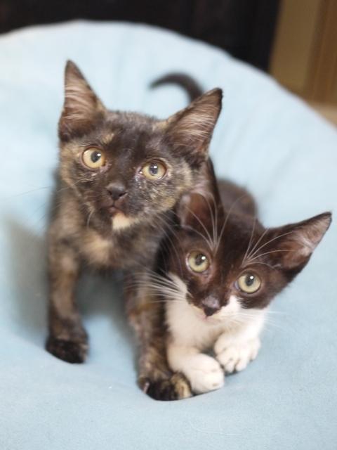 猫のお留守番 はちくんみつちゃん編。_a0143140_22015269.jpg