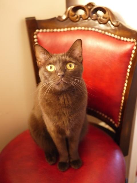 出会った日猫 あんしゃぁりぃ2年編。_a0143140_22372239.jpg