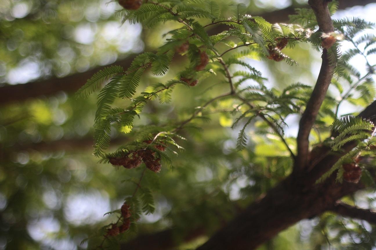 農風cafe 杜ノ遊庭あしびな さんへ行ってきました~_d0155147_19311589.jpg
