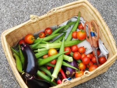 放置されても野菜は生きていた♪・・・南国畑_c0330749_15273750.jpg