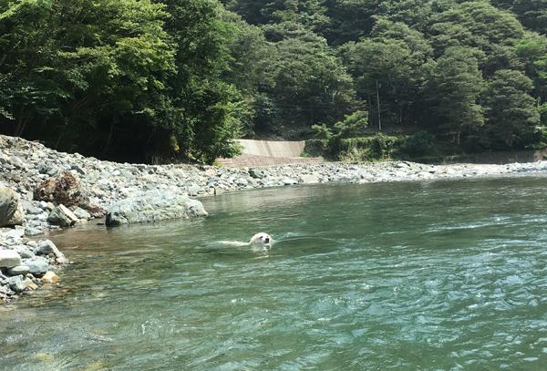 猛暑日2日目!_c0110361_09481422.jpg