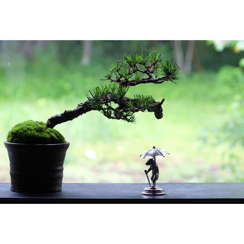 盆栽_a0335867_14131266.jpeg