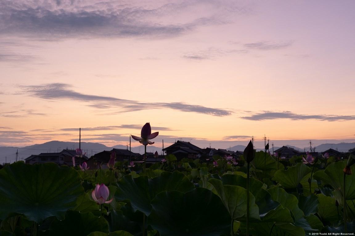 藤原京 夜明け_c0350572_22292453.jpg