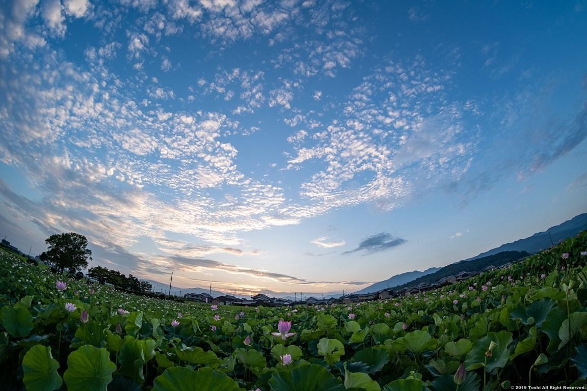 藤原京 夜明け_c0350572_22301622.jpg