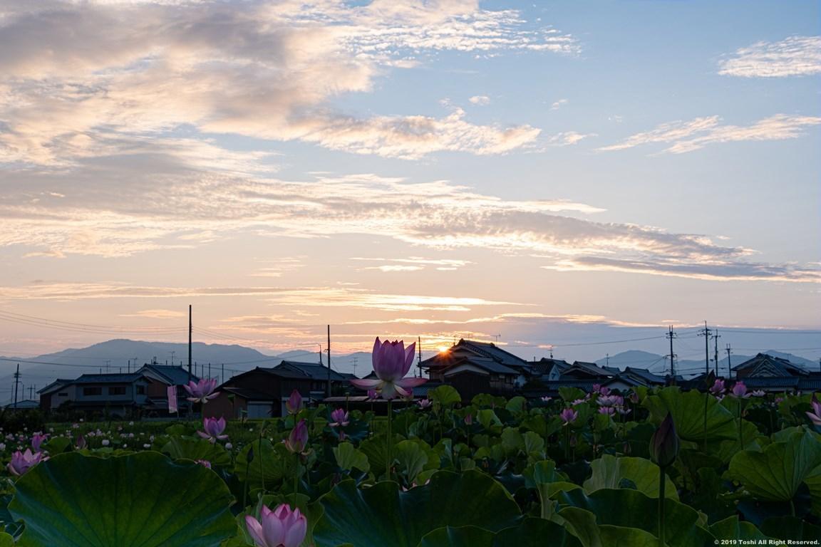 藤原京 夜明け_c0350572_22303159.jpg