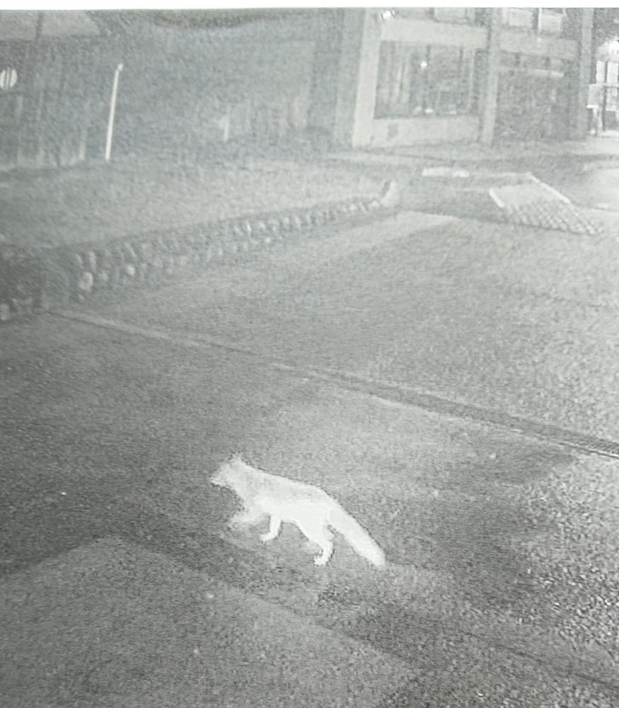 コンノスケ?ほんものの小狐でした。_f0168873_22144904.jpg