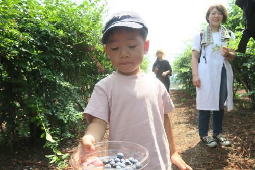 ブルーベリー収穫体験_f0327175_15184360.jpg
