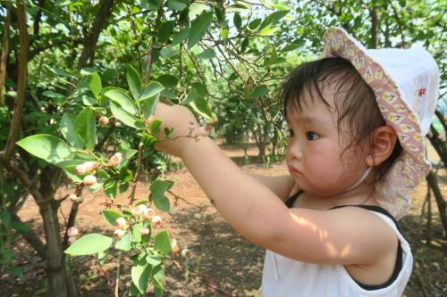 ブルーベリー収穫体験_f0327175_15193182.jpg
