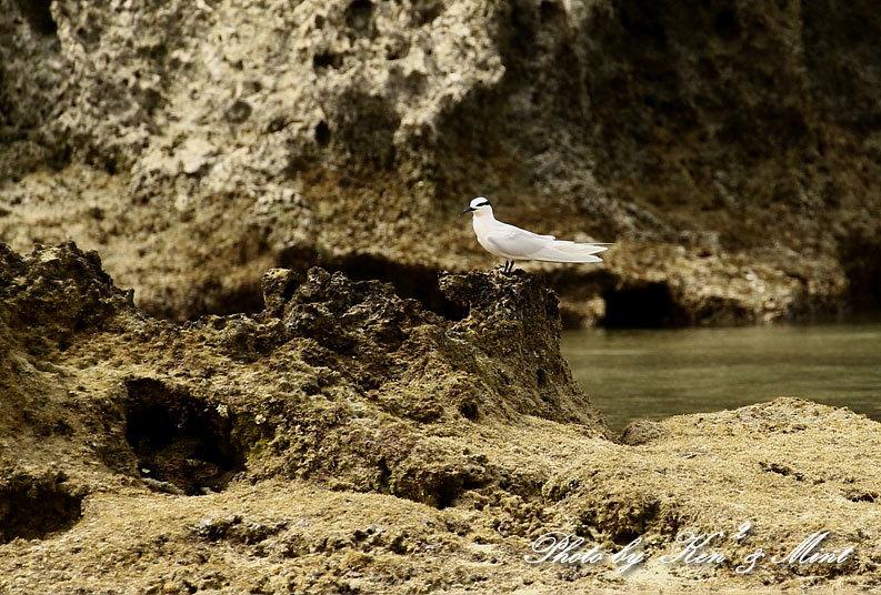 南の島3日目 伊良部島へ・・「エリグロアジサシ」さん「ダイサギ」さん~Σ^)_e0218518_21512630.jpg
