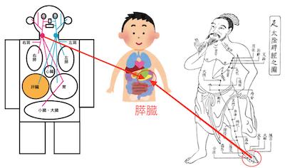 季節の変わり目の腰痛には、◯臓を整えましょう 〜ある日の施術より〜_e0073240_05492440.jpg