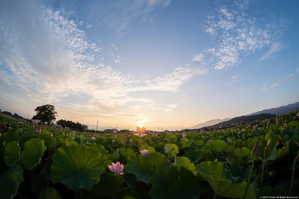 藤原京 夜明け後_c0350572_10080884.jpg