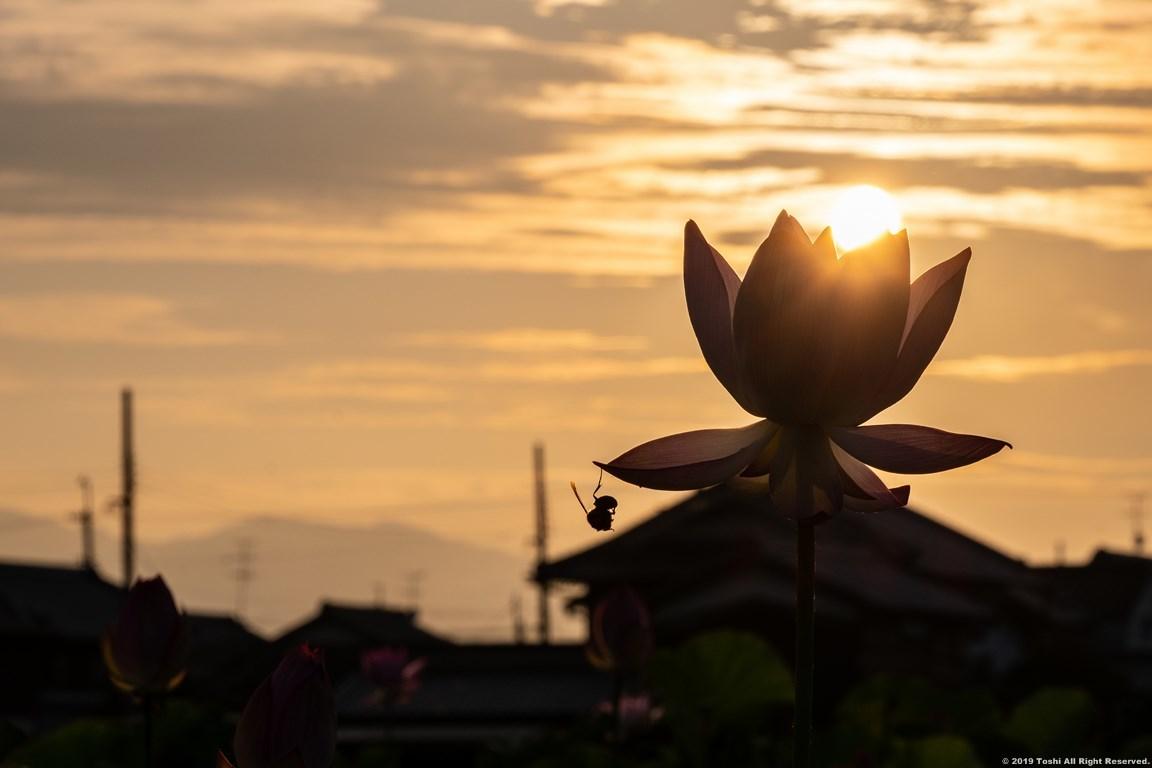 藤原京 夜明け後_c0350572_10084568.jpg