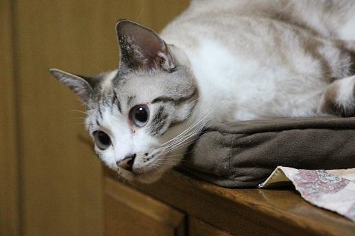 聞き耳を立てる猫_a0333195_11053720.jpg