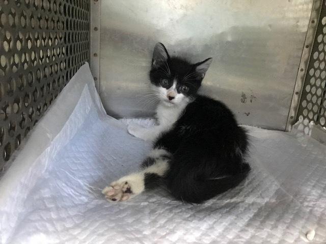 負傷収容のグレーの猫さん_f0242002_11285695.jpg