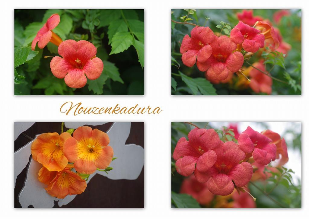夏の花 夏の日の別れ_d0147812_1611038.jpg